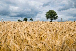 przewóz zbóż